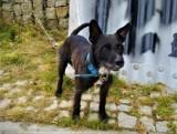 Ktoś zostawił przywiązanego psa na moście w Bytowie. Właściciela szuka policja
