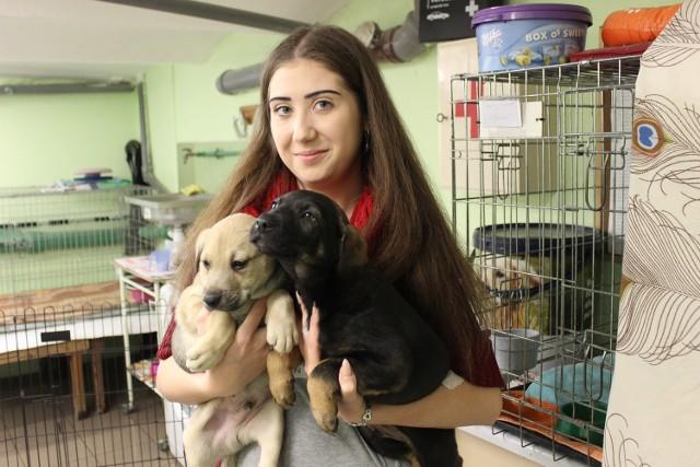 Jadwiga Muranowicz od lat jest wolontariuszką. - Szukamy domów m. in. dla tych szczeniaków - mówi.