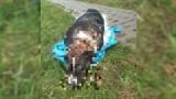 Nastolatek utopił psa! Wrzucił do kanału worek z 6-miesięcznym psem. Został zatrzymany za zabicie zwierzęcia