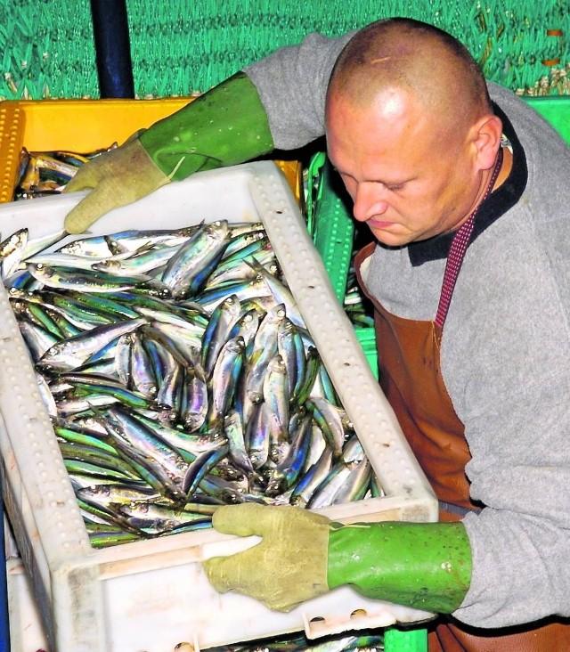 Rybacy mogli w tym roku odłowić 73 tysiące ton szprota