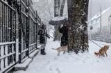 Zimą zwierzęta marzną tak samo jak ludzie. Jeśli nie dbasz o swojego psa czy kota, musisz się liczyć z konsekwencjami