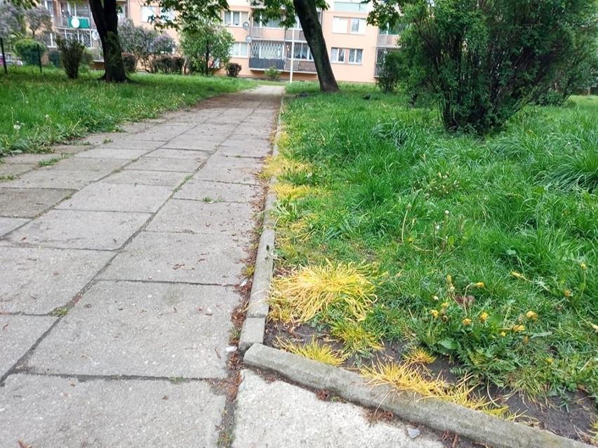 Na osiedlu przy ul. Marysińskiej w Łodzi masowo zaczęły...
