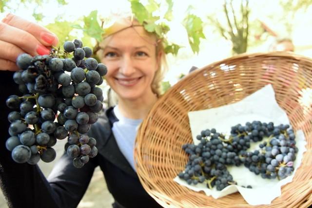 """Muzeum Etnograficzne w Zielonej Górze – Ochli zorganizowało Winobranie w Skansenie. Choć nie jest już ciepło, frekwencja dopisała! Zielonogórzanie są już przyzwyczajeni do ciekawych imprez w skansenie w Ochli. Jakie atrakcje przygotował dla nich ośrodek tym razem? Był to m.in. korowód, zbiór i tłoczenie winogron z użyciem zabytkowych urządzeń, konkurs win domowych, otwarcie wystawy """"Winiarz Lubuski Jerzy Hadzicki"""". W programie znalazły się także gry i zabawy dla dzieci, degustacje oraz jarmark. Na scenie wystąpił Lubuski Zespół Pieśni i Tańca, ale to nie wszystko! W niedzielę mogliśmy podziwiać także m.in. Kapelę Rodziny Buganików, Zespół Romski Vanessa i Sorba oraz Zespół Łazar & Mossier.Zobacz, jak wyglądał winobraniowy korowód:"""