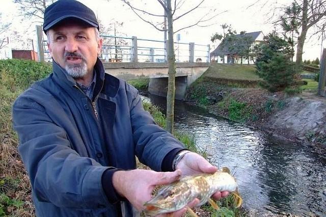 - Śnięte ryby mają krwisto czerwone skrzela; widać także jak próbują ostatkiem sił łykać powietrze nad taflą wody - mówi Waldemar Włodara, inspektor weterynarii. - To oznacza, że substancja, która pojawiła się w wodzie, znacząco ograniczyła ilość tlenu.