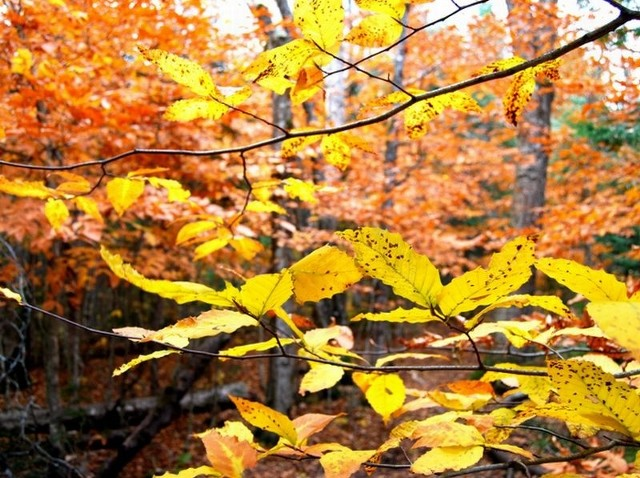 Jesień mamy w pełni
