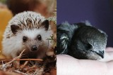"""Lublin pomaga """"dzikim zwierzętom"""". Domki lęgowe dla ptaków i schronienie dla małych ssaków. Zobacz, gdzie staną"""