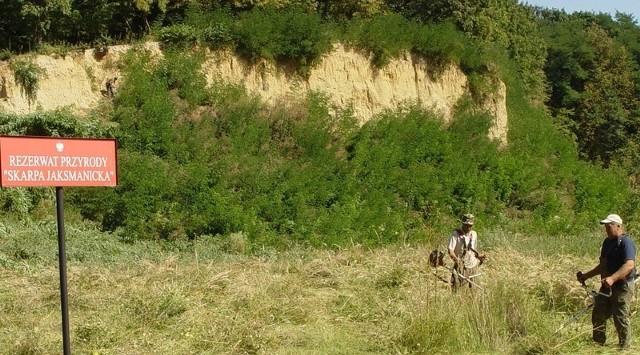 W Siedliskach ekolodzy chronią nie tylko rośliny ale też żołnę, rzadki gatunek ptaka.