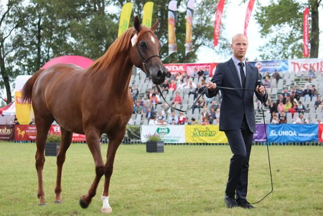 Paweł Kozikowski to licencjonowany prezenter koni arabskich