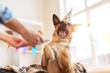Ile żyją zwierzęta domowe? Jak policzyć wiek psa? Pies to nie prezent! Kupując, bierzesz odpowiedzialność za całe jego życie