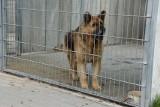 """Fundacja """"Siedem życzeń"""" traci umowę na prowadzenie schroniska dla zwierząt w Grudziądzu. Prezydent miasta: - Musieliśmy to przeciąć"""