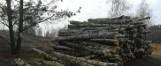 Kościół chce zamienić las koło Łodzi w kopalnię piasku. Mieszkańcy bronią lasu w Porszewicach przed planami kościoła