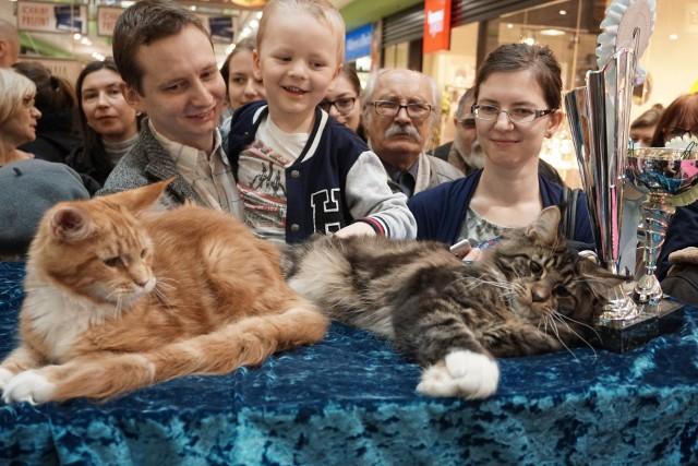 Rasowe koty prezentowane w niedzielę w Galerii Łódzkiej podobają się dzieciom i dorosłym