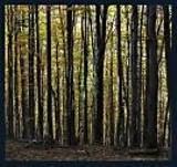 Wstęp do lasu dozwolony