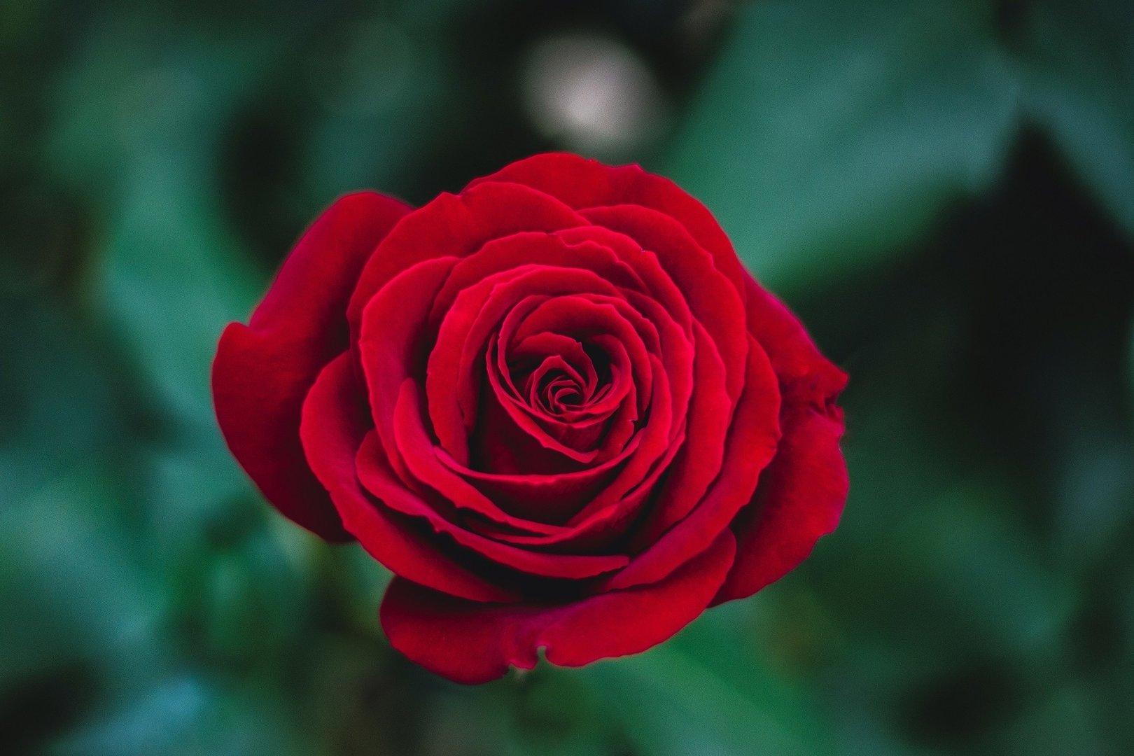 życzenia Imieninowe Dla Małgorzaty 17 Października Na