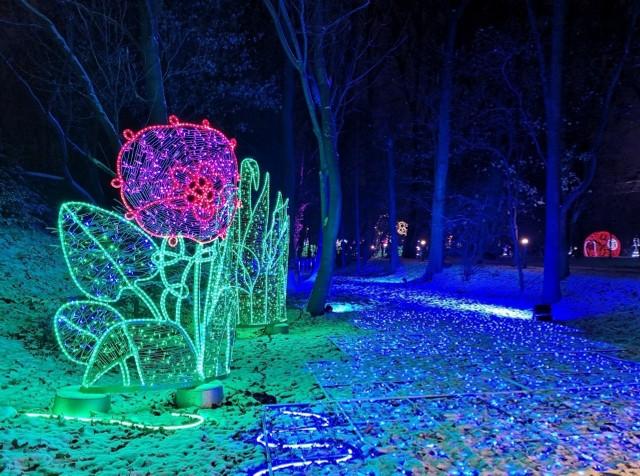 Uniwersytet Przyrodniczy zapowiada powstanie parku iluminacji w na terenie Ogrodu Dendrologicznego przy ul. Wojska Polskiego w Poznaniu.