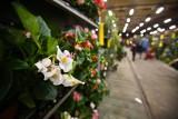W Arkadach Wrocławskich za zakupy dostaniesz kwiaty doniczkowe