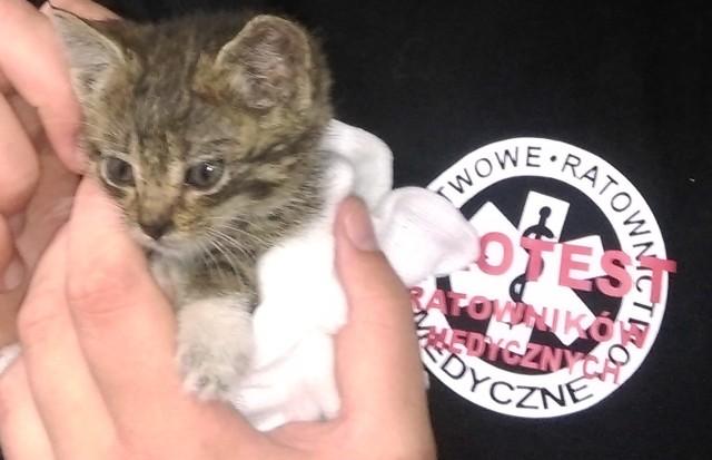 Małego kotka ocalili ratownicy medyczni