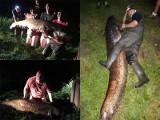 Gigantyczny sum złapany w okolicy Białogardu. 225 cm długości i 65 kg wagi [zdjęcia]