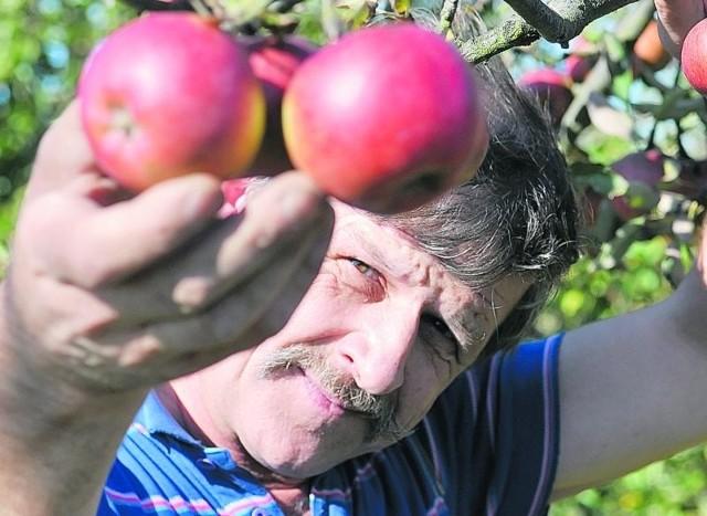- Jeśli zostaną wprowadzone opłaty za korzystanie z działki, prawdopodobnie z niej zrezygnujemy - mówi Marian Konczanin z Sulechowa. - Żal nie tylko naszego azylu, ale także zdrowych warzyw i owoców.