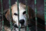 Uwaga! Za porzucenie psa czy kota grozi nawet więzienie. Są nowe przepisy
