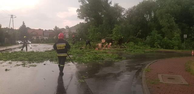 Powalone drzewo w Bibicach po bury i ulewie, która przeszła nad powiatem krakowskim we wtorek po południu