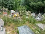 """Zielonej Górze. Nieporządek na cmentarzu? """"Robimy wszystko, aby dbać o alejki"""" - przekonuje kierownik nekropolii"""