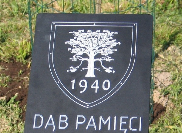 W Bolestraszycach zasadzone zostaną katyńskie Dęby Pamięci.