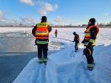 Zima nie odpuszcza, mrozy zagrożeniem dla zwierząt. Strażacy z OSP spieszą na ratunek