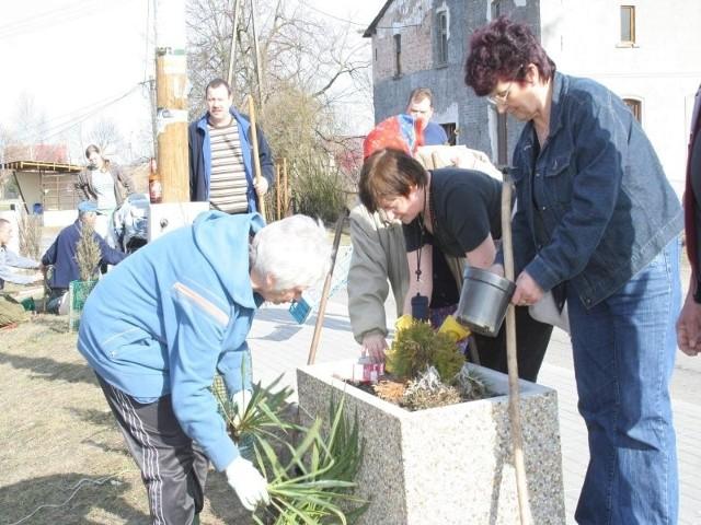 Starogrodzianie nie tylko sprzątali, ale też posadzili kwiaty i krzaczki do ozdobnych donic