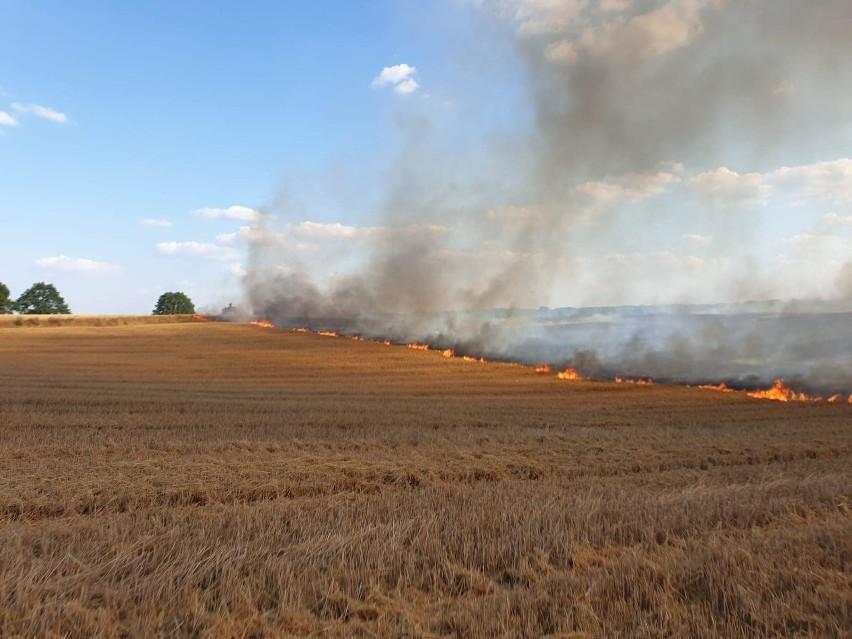 Gigantyczny pożar zboża. W akcji kilkanaście zastępów straży i śmigłowiec gaśniczy