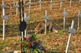 """Kraków. Wielki lis krążył po Cmentarzu Rakowickim. """"Wypasiony, żeby nie lisia kita, to wziąłbym go za psa"""" [ZDJĘCIA]"""
