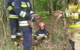 Trzy małe dziki uwięzione w studni w Bliżynie ratowali skarżyscy strażacy [ZDJĘCIA]