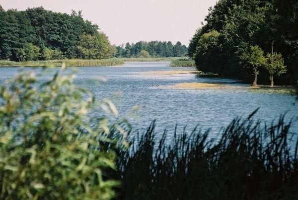 Niegdyś muliste jezioro bylo zarybione sumem. Okazy osiągają dzisiaj 25 kilogramów.
