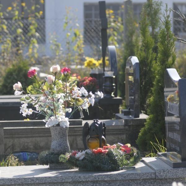 Hieny cmentarne na Półwsi grasują cały rok, ale najwięcej ich w przededniu Wszystkich Świętych.