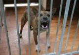 Pies pozostawiony bez opieki pogryzł dziewczynkę. Właściciel stanie przed sądem