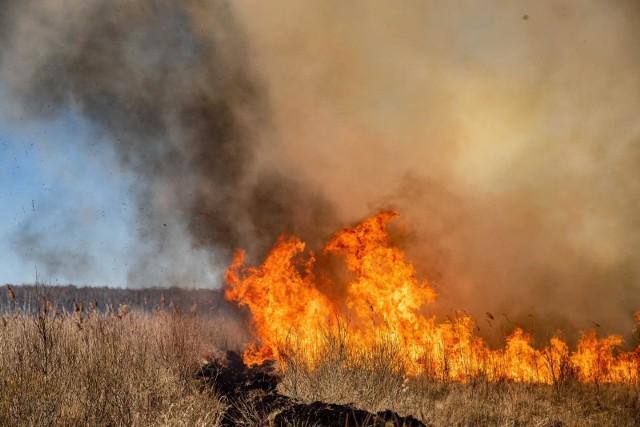 Akcja gaszenia pożaru w Biebrzańskim Parku Narodowym