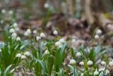 Prognoza pogody dla Wielkopolski na pierwszy tydzień marca. Sprawdź, czy w najbliższych dniach będzie już koniec zimy i poczujemy zew wiosny