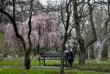 Dziś pierwszy dzień astronomicznej wiosny. A kiedy rzeczywiście do nas zawita?