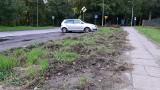 Dziki spacerują po ulicy Leśnej w Słupsku i ryją trawniki [ZDJĘCIA]