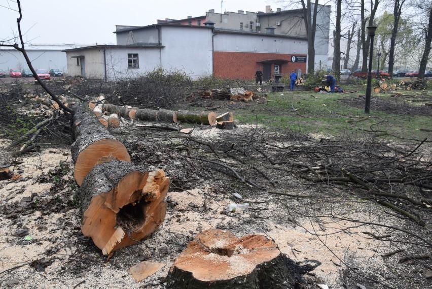 Rybnik: Drzewa przy kinie Hutnik wycięte. Kloch: To mógł być najstarszy park Rybnika