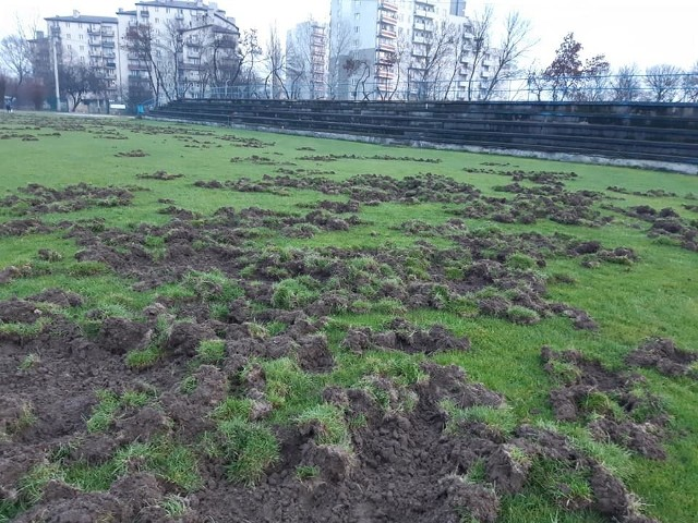 Boisko Albertusa Kraków zostało zniszczone przez dziki, które wdarły się na nie przez ogrodzenie. Teraz murawę czeka kosztowna naprawa