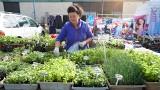 Za warzywa i owoce trzeba płacić krocie! A jakie są ceny na ryneczku w Gorzowie? 21 MAJA