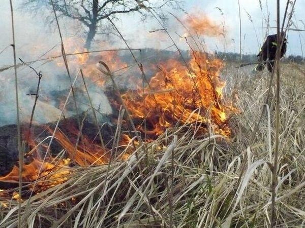 Płonące trawy koło Murzynowa gasiło sześciu strażaków