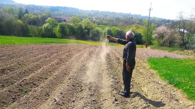 Ziemniaki już posadzone, ale ziemia wciąż wysuszona jest na pył