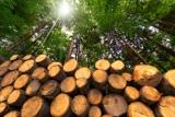 Biomasa. Unijna eko-ściema