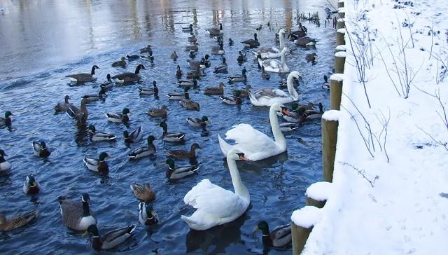 Zwierzęta potrzebują zimą pomocy ludzi