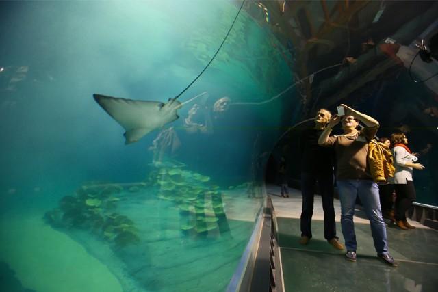 Oceanarium we Wrocławiu.