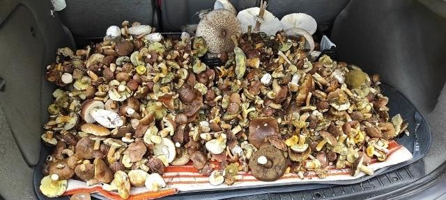 Grzybobranie 2021 w regionie radomskim. Zobacz ile grzybów można zebrać w podradomskich lasach!Grzybobranie 2021 w regionie radomskim. Zobacz zdjęcia zbiorów naszych czytelników!