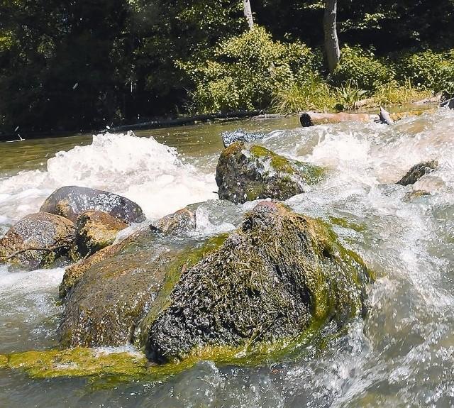 Dzika Pliszka jest rajem dla wędkarzy i miłośników spływów