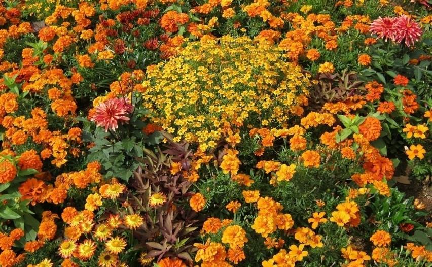 Rabaty Kwiatowe Jak Je Komponować żeby Pięknie Wyglądały